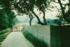 172-sdg-srila-prabhupada